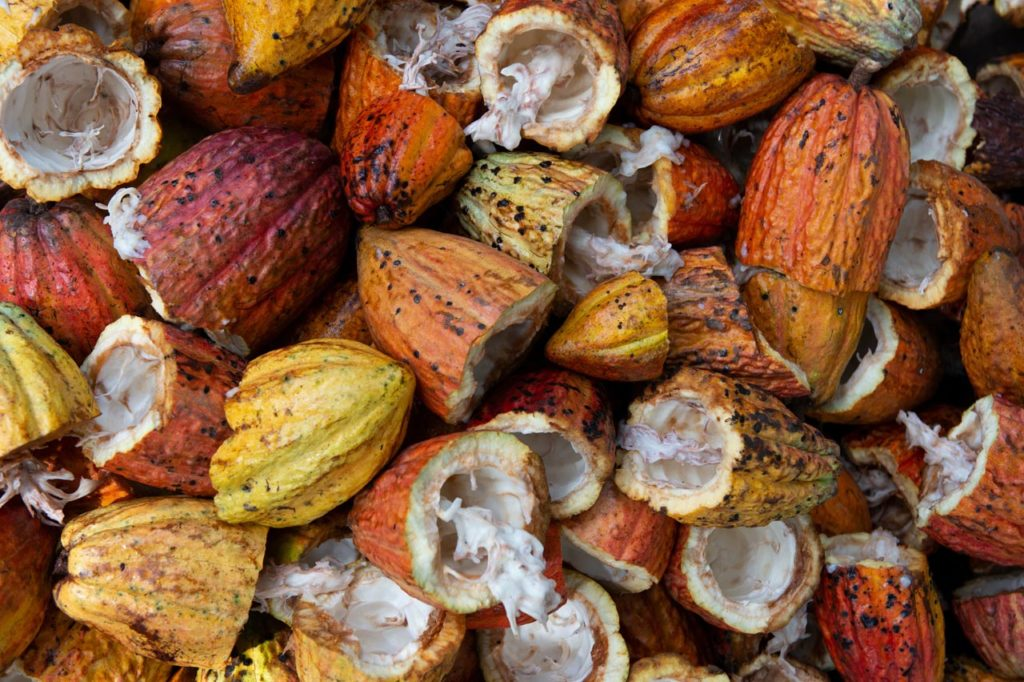 La transformation du cacao en chocolat